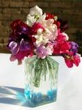 Γλυκά λουλούδια μπιζελιών που απομονώνονται στο υπόβαθρο τούβλου στοκ εικόνες με δικαίωμα ελεύθερης χρήσης