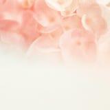 Γλυκά λουλούδια στο μαλακό και ύφος θαμπάδων στη σύσταση εγγράφου μουριών Στοκ Εικόνες