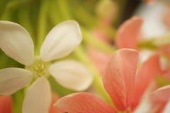 Γλυκά λουλούδια χρώματος στο μαλακό και ύφος θαμπάδων Στοκ Φωτογραφία