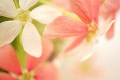 Γλυκά λουλούδια χρώματος στο μαλακό ύφος στη σύσταση εγγράφου μουριών Στοκ εικόνα με δικαίωμα ελεύθερης χρήσης