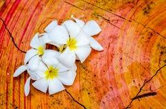 Γλυκά λουλούδια Plumeria (frangipani) στον πίνακα Στοκ φωτογραφία με δικαίωμα ελεύθερης χρήσης