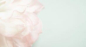 Γλυκά πέταλα λωτού χρώματος στο μαλακό ύφος χρώματος και θαμπάδων Στοκ φωτογραφίες με δικαίωμα ελεύθερης χρήσης
