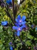 Γλυκά πορφυρά μπλε μικρά πράγματα Στοκ Εικόνες