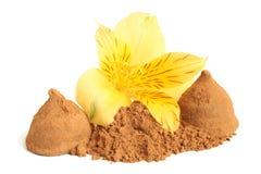 Γλυκά σκονών κακάου και σοκολάτας με το λουλούδι του alstroemeria Στοκ Φωτογραφίες