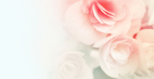 Γλυκά τριαντάφυλλα χρώματος στο μαλακό και ύφος θαμπάδων στη σύσταση εγγράφου μουριών Στοκ Εικόνα