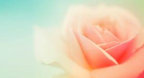 Γλυκά τριαντάφυλλα χρώματος στο μαλακό και ύφος θαμπάδων στη σύσταση εγγράφου μουριών Στοκ φωτογραφίες με δικαίωμα ελεύθερης χρήσης