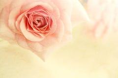 Γλυκά τριαντάφυλλα χρώματος στο μαλακό ύφος χρώματος και θαμπάδων στη σύσταση εγγράφου μουριών Στοκ εικόνα με δικαίωμα ελεύθερης χρήσης