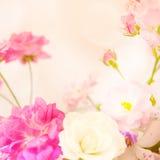 Γλυκά τριαντάφυλλα χρώματος στο μαλακό ύφος χρώματος και θαμπάδων Στοκ Εικόνες