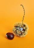 Γλυκά φρούτα κάστανων με τους σπόρους Στοκ Εικόνες