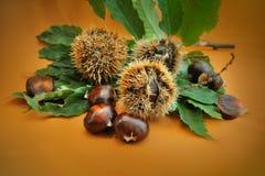 Γλυκά φρούτα κάστανων με το πράσινο φύλλο Στοκ φωτογραφίες με δικαίωμα ελεύθερης χρήσης