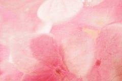 Γλυκά hydrangeas στο μαλακό ύφος χρώματος στη σύσταση εγγράφου μουριών Στοκ Φωτογραφία