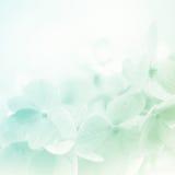 Γλυκά hydrangeas χρώματος στο μαλακό και ύφος θαμπάδων Στοκ Φωτογραφίες
