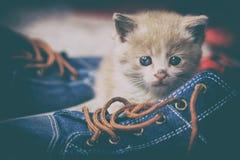Γλυκιά γάτα Στοκ Φωτογραφίες