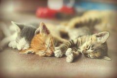 Γλυκιά ομάδα στιγμής Α διαφορετικού ύπνου γατακιών στο πάτωμα Ι Στοκ Εικόνα
