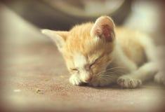 Γλυκιά ομάδα στιγμής Α διαφορετικού ύπνου γατακιών στο πάτωμα Ι Στοκ Φωτογραφίες