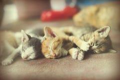Γλυκιά ομάδα στιγμής Α διαφορετικού ύπνου γατακιών στο πάτωμα Ι Στοκ Εικόνες