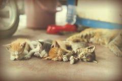 Γλυκιά ομάδα στιγμής Α διαφορετικού ύπνου γατακιών στο πάτωμα Ι Στοκ φωτογραφίες με δικαίωμα ελεύθερης χρήσης