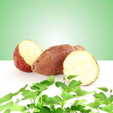 γλυκιά πατάτα με την ανάπτυξη των εγκαταστάσεων στο πράσινο υπόβαθρο Στοκ Εικόνες