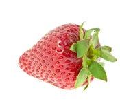 Γλυκιά φρέσκια φράουλα που απομονώνεται Στοκ εικόνες με δικαίωμα ελεύθερης χρήσης