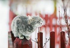 Γλυκοί τιγρέ περίπατοι γατών την άνοιξη στο χωριό και χαϊδευμένος στοκ φωτογραφίες