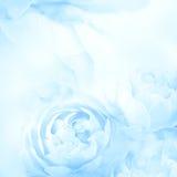 Γλυκός ο μπλε αυξήθηκε λουλούδια για το ρωμανικό υπόβαθρο αγάπης Στοκ Φωτογραφία
