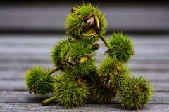 Γλυκός σωρός κάστανων Στοκ Εικόνες