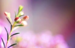 Γλυκός τόνος και μαλακό λουλούδι εστίασης στοκ εικόνες με δικαίωμα ελεύθερης χρήσης