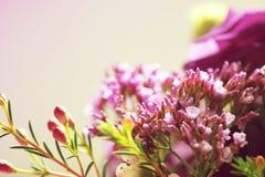 Γλυκός τόνος και μαλακό λουλούδι εστίασης στοκ φωτογραφία με δικαίωμα ελεύθερης χρήσης