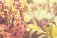 Γλυκός τόνος και μαλακό λουλούδι εστίασης στοκ φωτογραφία