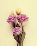 Γλυκός τόνος και μαλακό λουλούδι εστίασης στοκ εικόνα