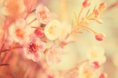 Γλυκός τόνος και μαλακό λουλούδι εστίασης στοκ εικόνες