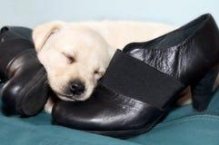 Γλυκός ύπνος σκυλιών Στοκ φωτογραφία με δικαίωμα ελεύθερης χρήσης