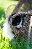 Γλυκό λίγο γραπτό γατάκι Στοκ εικόνες με δικαίωμα ελεύθερης χρήσης