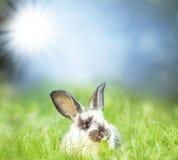 Γλυκό λιβάδι λαγουδάκι Πάσχας την άνοιξη Στοκ Εικόνες