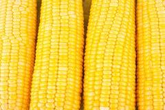 Γλυκό καλαμπόκι στους πυρήνες σπαδίκων ή τα σιτάρια του ώριμου καλαμποκιού στο άσπρο λαχανικό καλαμποκιού υποβάθρου που απομονώνε Στοκ εικόνες με δικαίωμα ελεύθερης χρήσης