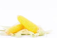 Γλυκό καλαμπόκι στους πυρήνες σπαδίκων ή τα σιτάρια του ώριμου καλαμποκιού στο άσπρο λαχανικό καλαμποκιού υποβάθρου που απομονώνε Στοκ φωτογραφίες με δικαίωμα ελεύθερης χρήσης