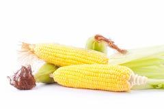 Γλυκό καλαμπόκι στους πυρήνες σπαδίκων ή τα σιτάρια του ώριμου καλαμποκιού στο άσπρο λαχανικό καλαμποκιού υποβάθρου που απομονώνε Στοκ Εικόνες
