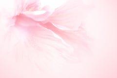 Γλυκό μαλακό ύφος λουλουδιών για το υπόβαθρο στοκ εικόνα