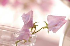 Γλυκό λουλούδι μπιζελιών στοκ φωτογραφίες