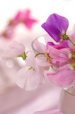 Γλυκό λουλούδι μπιζελιών στοκ εικόνες