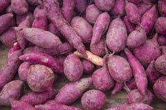 γλυκό πατατών Στοκ εικόνα με δικαίωμα ελεύθερης χρήσης