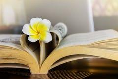 Γλυκό ρομαντικό plumeria ή frangipani λουλουδιών στο βιβλίο και την καρδιά s Στοκ φωτογραφία με δικαίωμα ελεύθερης χρήσης