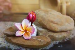 Γλυκό ρόδινο κίτρινο plumeria ή frangipani λουλουδιών στο νερό και peb Στοκ Εικόνες