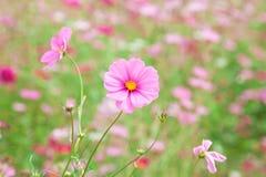 Γλυκό ρόδινο λουλούδι Στοκ Φωτογραφία