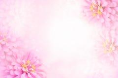 Γλυκό ρόδινο πλαίσιο λουλουδιών στο μαλακό εκλεκτής ποιότητας υπόβαθρο bokeh Στοκ Εικόνες