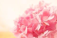 Γλυκό ρόδινο Hydrangeas στο καλάθι Στοκ φωτογραφίες με δικαίωμα ελεύθερης χρήσης