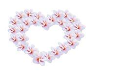 γλυκό ρόδινο plumeria λουλουδιών στη δέσμη σχεδίων καρδιών Στοκ εικόνες με δικαίωμα ελεύθερης χρήσης