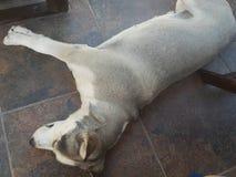 Γλυκό σκυλί Στοκ Φωτογραφίες