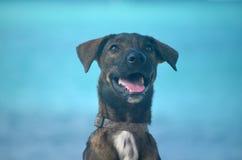 Γλυκό σκυλί Aruban Cunucu Στοκ φωτογραφία με δικαίωμα ελεύθερης χρήσης