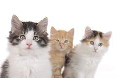 Γλυκό τρία λίγο γατάκι Στοκ φωτογραφία με δικαίωμα ελεύθερης χρήσης